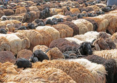 Viehmarkt Kashgar2