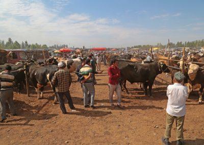 Viehmarkt Kashgar5