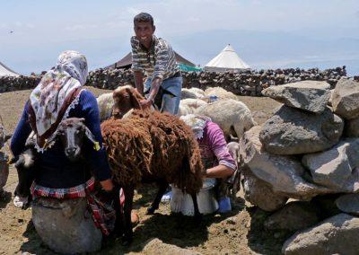 zu Gast bei Nomaden